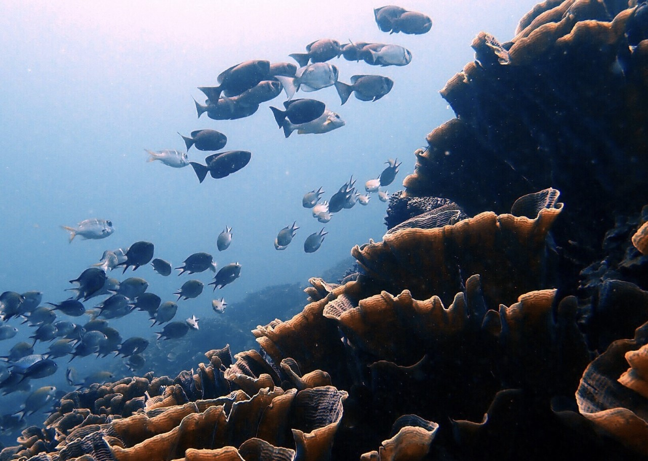 How to Choose the Best Dive Center in Komodo Island | Aqura Dive